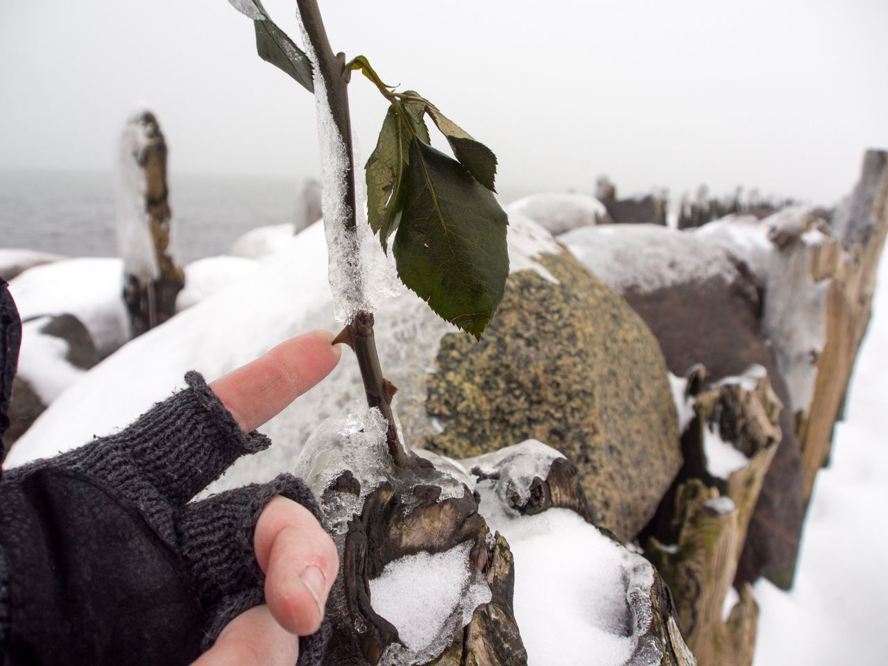 Cropped Hand Touching Thorn Against Sea During Winter