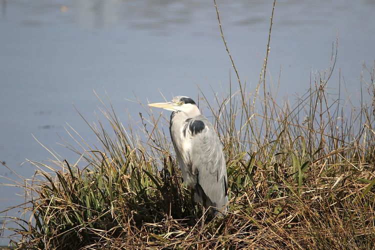 View of bird on grass at lakeshore