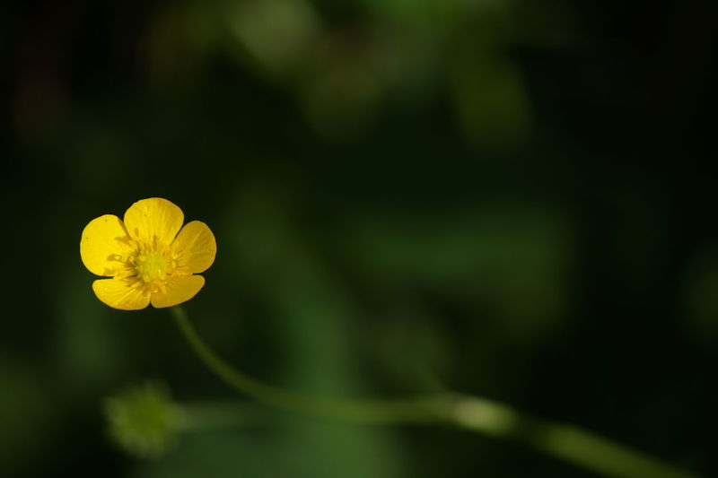 Beauty In Nature Close-up Flower Flower Head Freshness Nature No People Outdoors Yellow