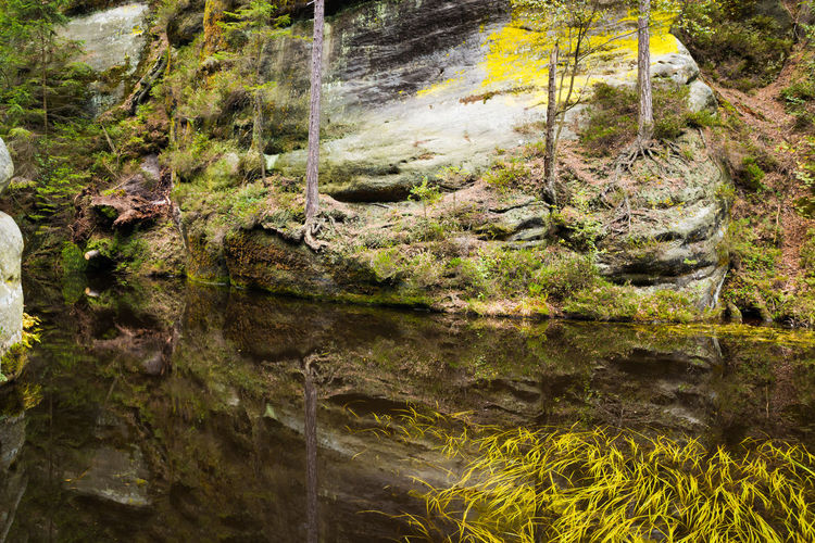 Adršpach Adršpachské Skály Beauty In Nature Day Moss Mountain Nature No People Outdoors Rock - Object Rock Face Tree Water