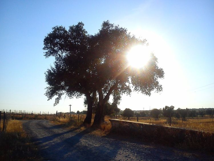 Tree Outdoors Nature Sunlight Rural Scene Sky Day Shadow No People Landscape Clear Sky Innovation Beauty In Nature Pixelated Portugal Alentejo Baixo Alentejo Alentejo 🌞 Alentejo,Portugal The Week On EyeEm Alentejo-Portugal Alentejo, Portugal