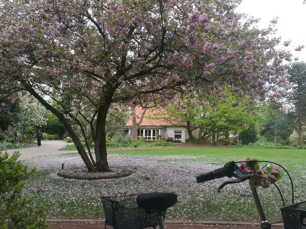 Nordhorn Stadtpark Fahrrad Blume🌸