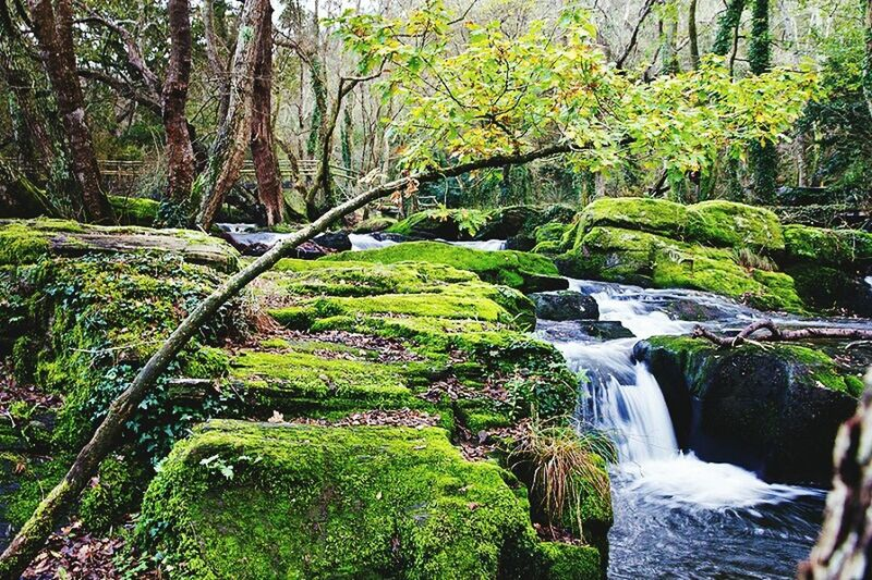 Forest Stream Water Flowing Water Flowing Scenics Motion Tree Tree Trunk Beauty In Nature WoodLand Tranquil Scene Non-urban Scene Nature Green Color Green Color Moss Long Exposure Tranquility Waterfall Environment Bosque España🇪🇸 Otoño 🍁