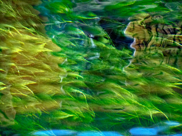 Beauty In Nature Close-up Floating Weeds Green Shades Nature No People Outdoors Patterns & Textures Water Water Reflections Water Weeds BYOPaper!