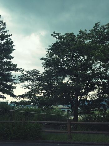 いつもの帰り道。 IPhoneography EyeEm Nature Lover 何処へでも続く道がある 帰り道 桜の木 Osaka,Japan