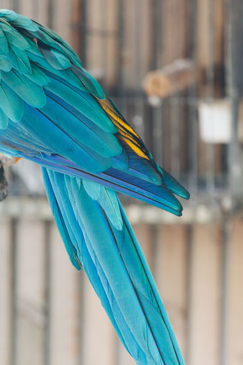 Animal Animal Body Part Animal Themes Bird Blue Built Structure Close-up Day Feather  Focus On Foreground Macaw Multi Colored No People One Animal Outdoors Parrot Part Of Selective Focus Blue Wave