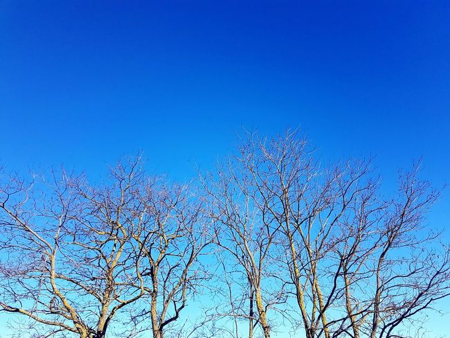 Blue Sky Clear Sky Flying Blue Flock Of Birds Tree Sky Animal Themes Close-up Plant Life Bare Tree Flower Head Single Flower Growing Lone EyeEmNewHere