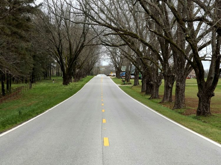 """""""In the middle of the road, yeah """" Early Spring Country Road Oak Trees Highwayscape Highway 431 Country SideVanishingpoint Country Drive Road To Nowhere Roadscenes Road Trippin' On The Road Road Trip Spring2015"""
