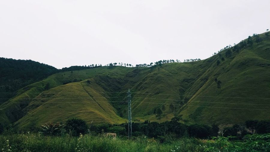 mountain line Tree Rural Scene Agriculture Tea Crop Hill Social Issues Field Sky Landscape Grass Tree Area