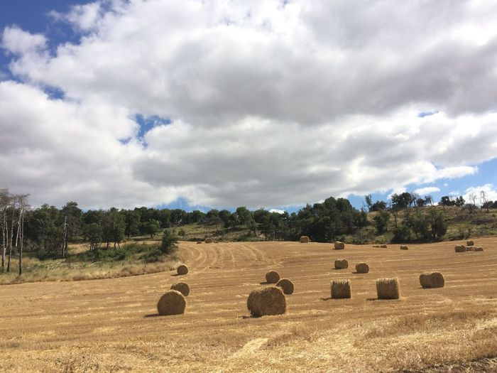 Agriculture Bale  Beauty In Nature Cloud - Sky Day Field Hay Bale Landscape Nature No People Outdoors Paisaje Paja Scenics Sky Tranquil Scene Tranquility Tree