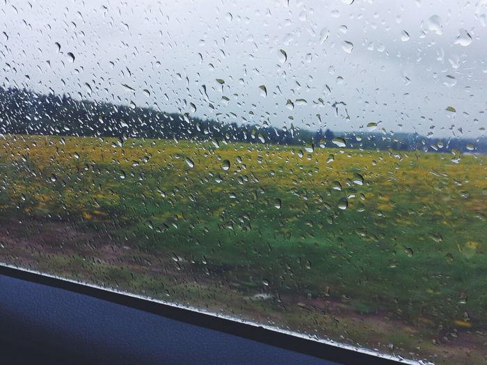 Дождь Countryside Relaxing Russia видизокна заокном Window Rain Rainy Day