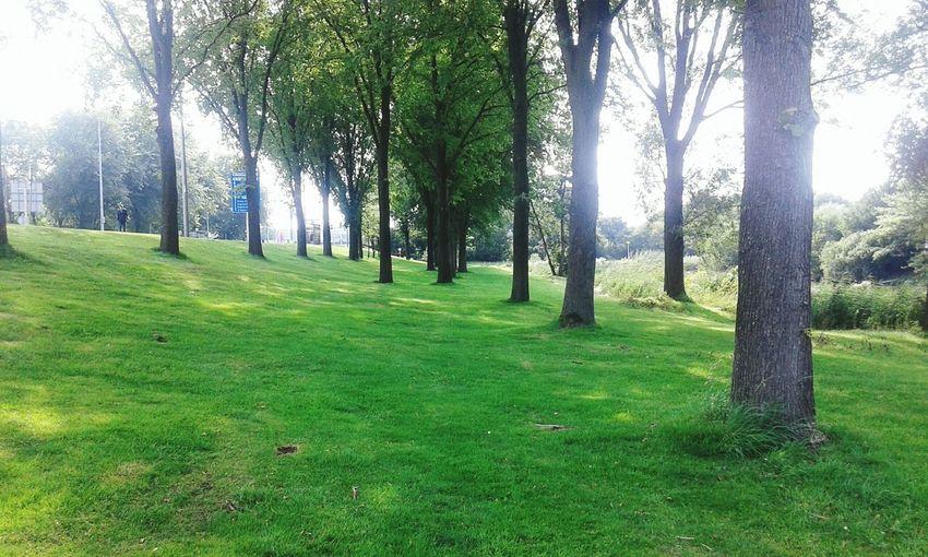 MY PLACE IN THE WORLD ♡ Amsterdam Diemen Zuid Trees Grass Nature