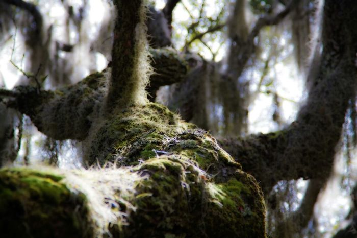 Live Oak TreePorn Enchanted Forest Photography