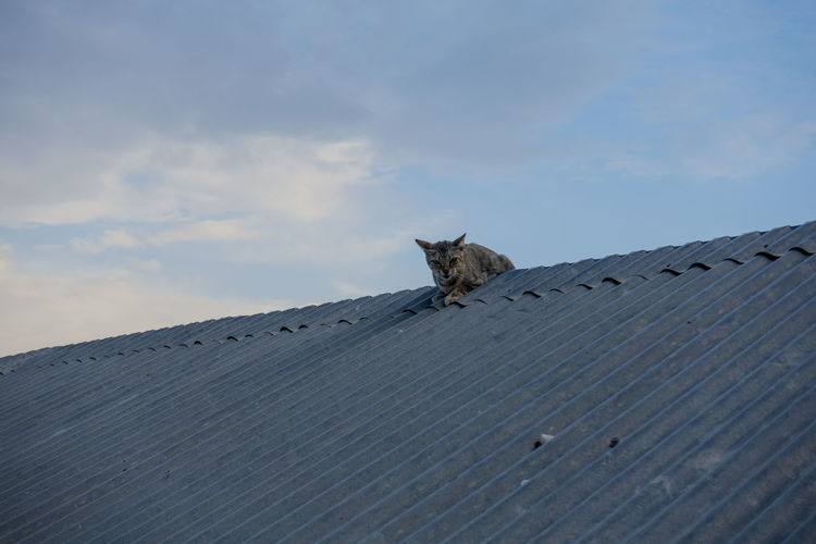 Low angle view of cat on roof against sky