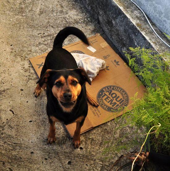Alert Always Alert Anti Social Barking Bestfriend Body Guard Dog Domestic Animals Few Friends Face High Angle View Pets Street Dog Wellcome! Pet Portraits