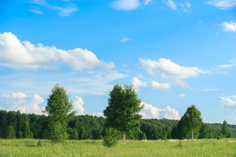 Trees Beauty In Nature Cloud - Sky Day Environment Field Grass Green Color Growth Idyllic Land Landscape Nature No People Non-urban Scene Outdoors Plant Scenics - Nature Sky Tranquil Scene Tranquility Tree Trees And Sky