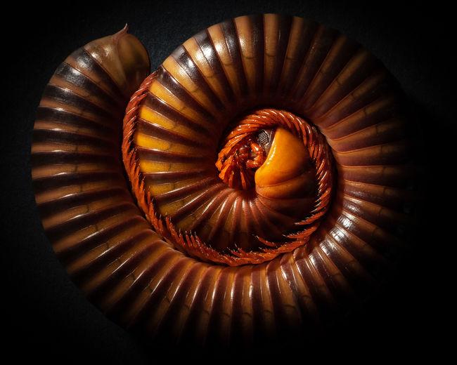 High angle view of seashell