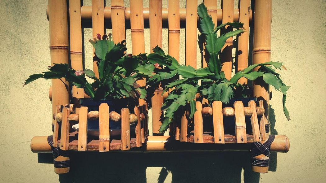 Plant Leaf Growth Wood - Material Green Color No People Building Exterior Table Fragility Flower Indoors  Nature Day Plants Bamboodesign Bamboo On The Wall Good Morning Morning EyeEm Gallery EyeEm Brazil Taking Photos EyeEm Best Edits Eyeem Market Editoftheday