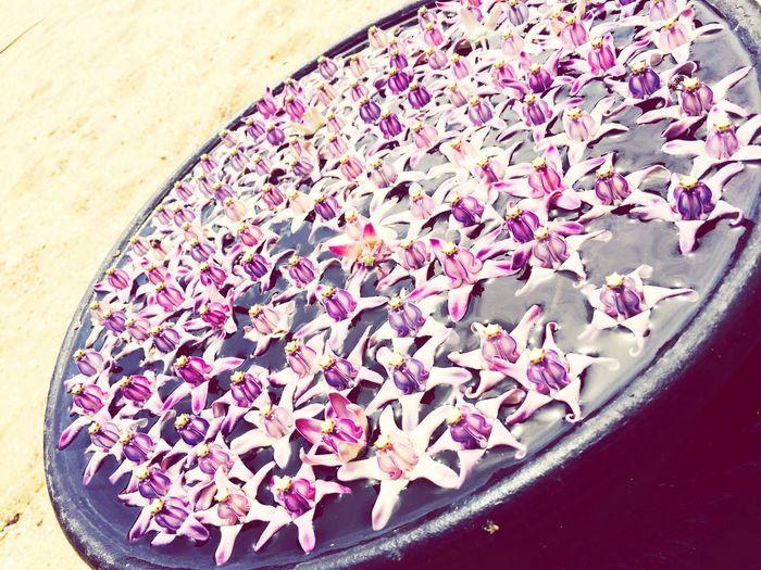 Flowers Maalumaalu SriLanka Srilankatravel