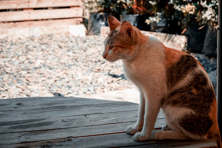 Cat looking away while sitting on wood