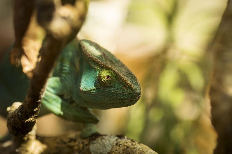 Close-up of a lizard