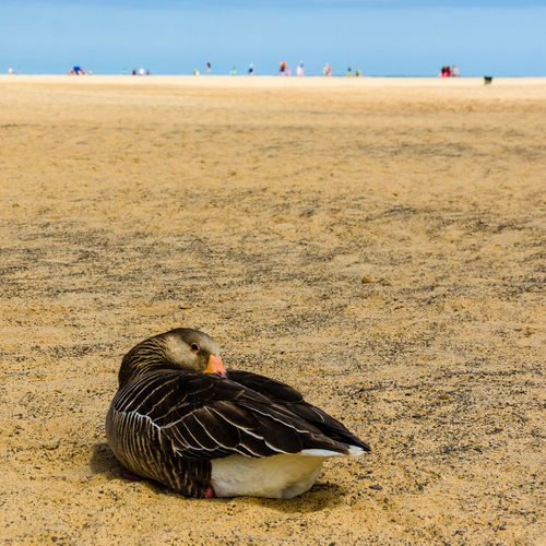 Animal Themes Animals In The Wild Beach Beauty In Nature Bird One Animal Sand Sea Shore Tranquility Wildlife