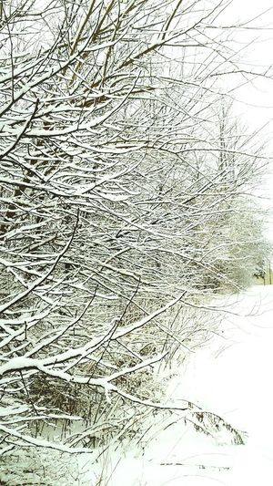Winter's Vanishing Point Winter Nature Outside Winter Wonderland