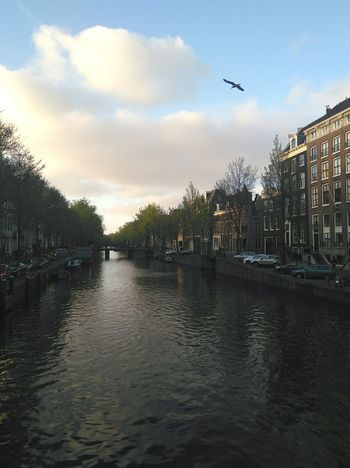 Sunset Water Sky Tree Grachten Vanishing Point Spring Vintage Amsterdam Bird Afterwork Canal Architecture Tourism Streetphotography Cityscapes