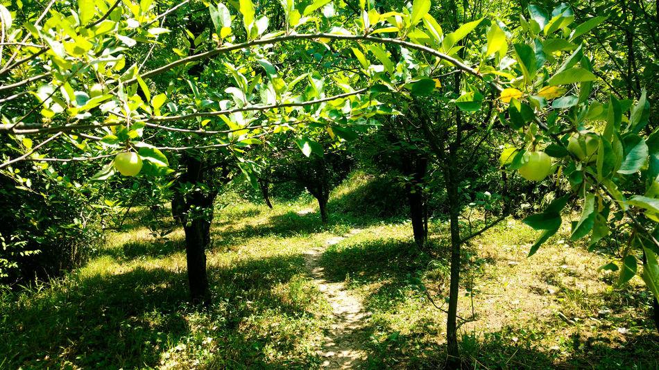 go green Nature Kasol India Appleorchard Gogreen Eco Friendly