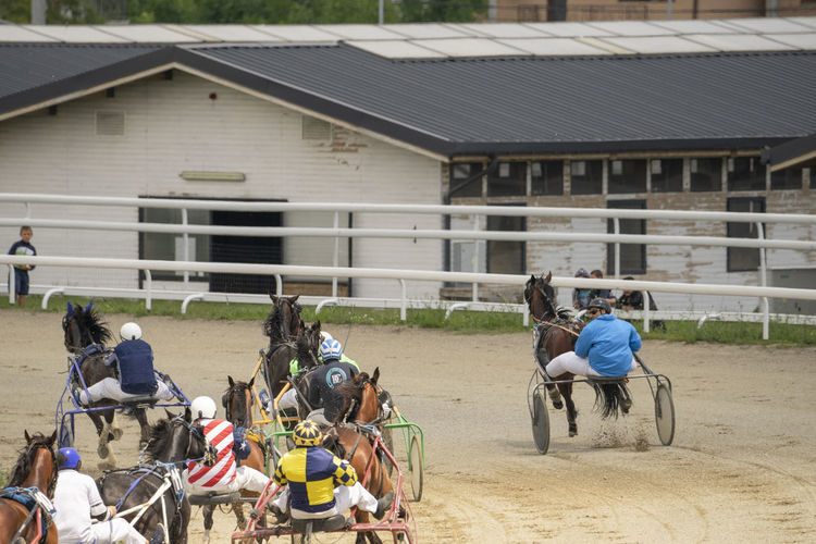 Animal Domestic Animals Caballos Speed Strength Skill  Pursuit  Follow Horses Racecourse Hippodrome Course People Man Ride Rider Jockey First Competition Competitors Horseshoe Sitting Men Group Of People Horse Cart Wagon Wheel Working Animal Horse Carriage