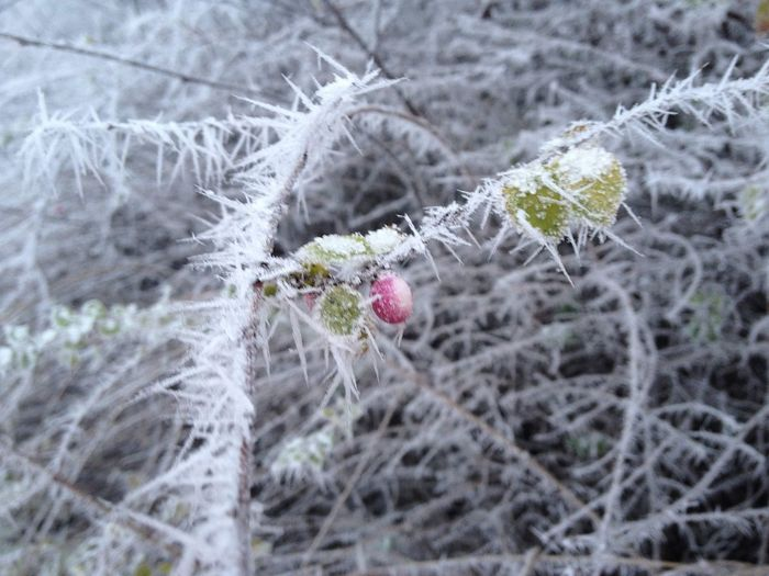 Close-up of frozen plant
