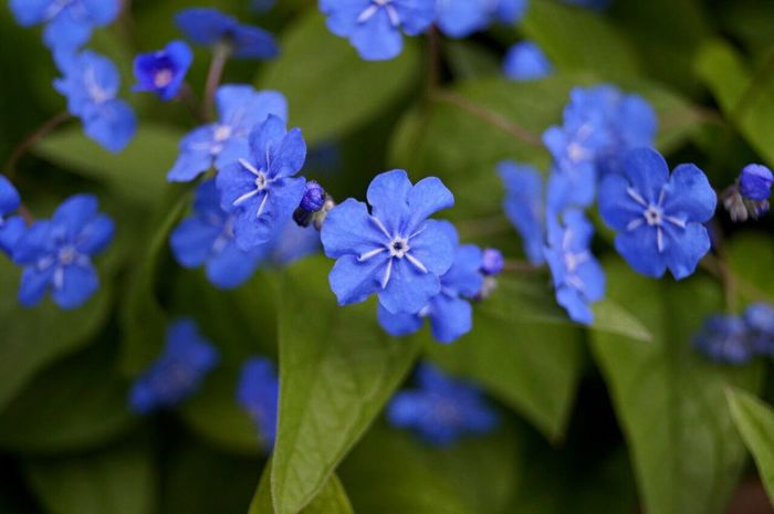 Flower Beauty In Nature Fragility Growth Petal Nature Blue Freshness Outdoors Blooming