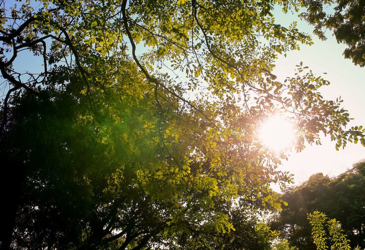 Tree Plant Sunlight Low Angle View Sky Beauty In Nature Sun Growth Day Nature Sunny Forest Bright Outdoors Lens Flare Green Color