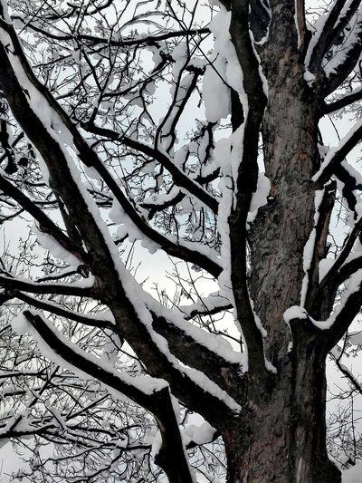 Snow Winterland
