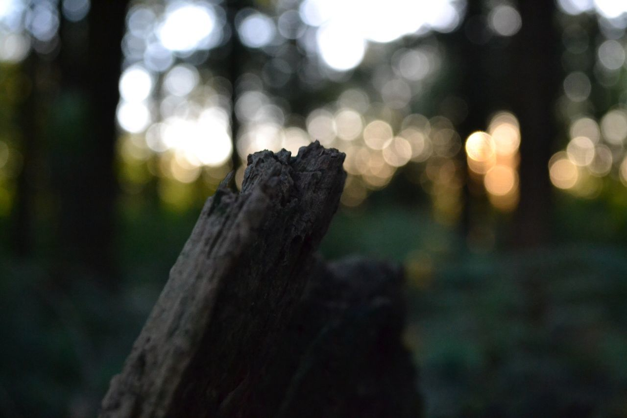 focus on foreground, no people, tree, close-up, nature, outdoors, tree trunk, day, beauty in nature