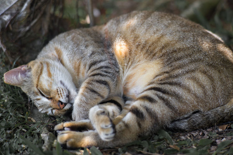 Cat sleeping in light and shade under a tree, with legs crossed. Animal Themes Cat Check This Out Dreaming Ear-ti Ear-tipping Eyes Closed  Grasses Light And Shadow Lying Down One Animal Pet Relaxation Resting Shades Of Grey Shadow Sleeping Spot Traveling Winter