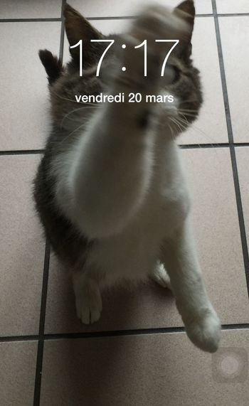 17:17 Un Thé ? Clock HEURE POLARIS Cat France CHATFIE Catfie Chat Mon Ami Le Chat