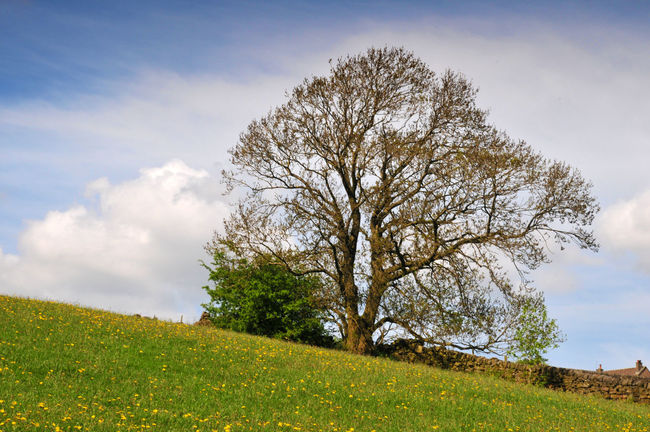 single tree in a bright spring meadow with farmhouse in the distance Farmhouse Hills Tree Beauty In Nature Cloud - Sky Day Environment Field Grass Green Color Growth Hill Hillside Land Landscape Nature No People Non-urban Scene Outdoors Sky Slope Springtime Tranquil Scene Tranquility Tree