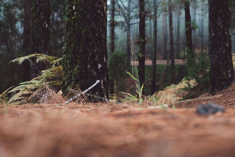 Surface level of trees in forest
