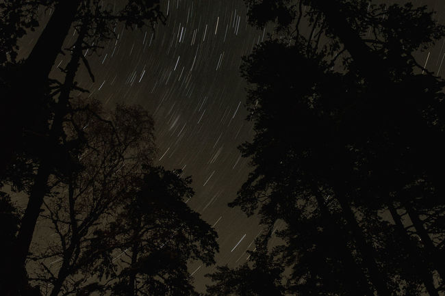 Astronomy Beauty In Nature Branch Low Angle View Nature Night No People Outdoors Space Space And Astronomy Star - Space Star Field Star Trail Tranquil Scene Tree