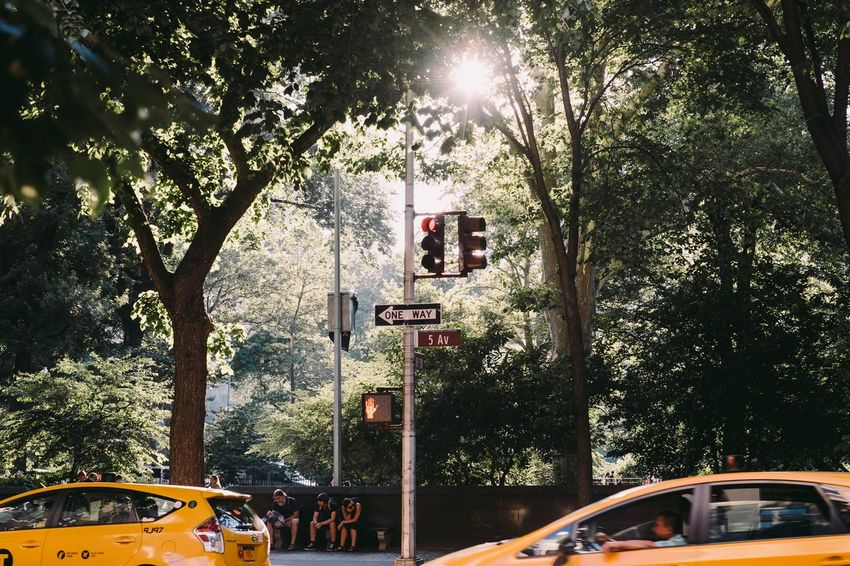 Central Park New York USA Wanderlust Car City Fifthavenue Nature Outdoors Real People Speed Sunlight Transportation Tree Yellowcab