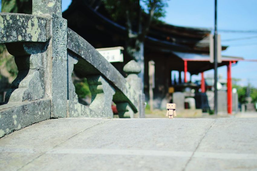 相棒のダンボー Taking Photos Shrine Stone Bridge Danbo Cheese!