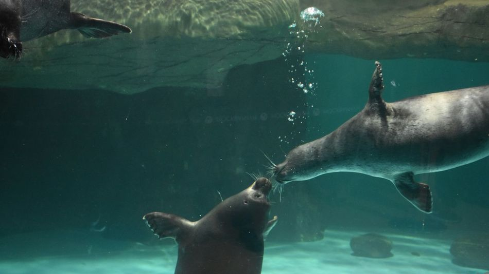 Holiday in Russia Animal Love of Seals