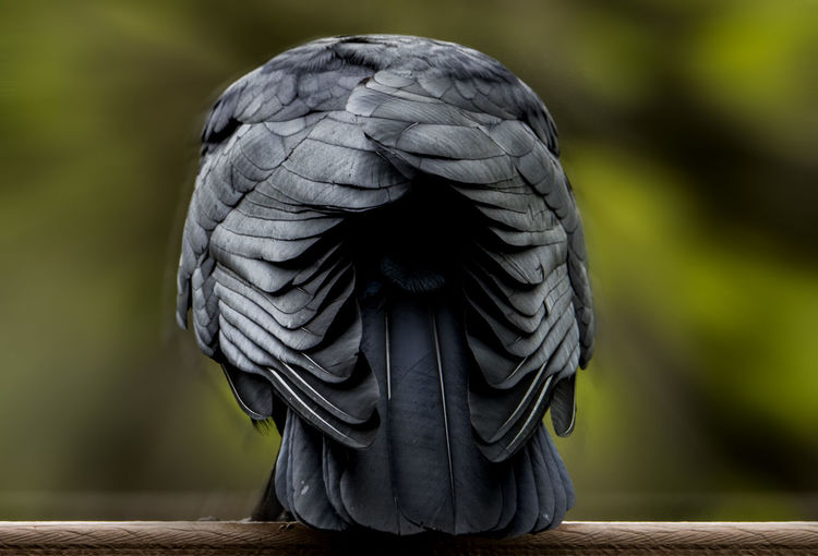 Close-up of parrot on wood