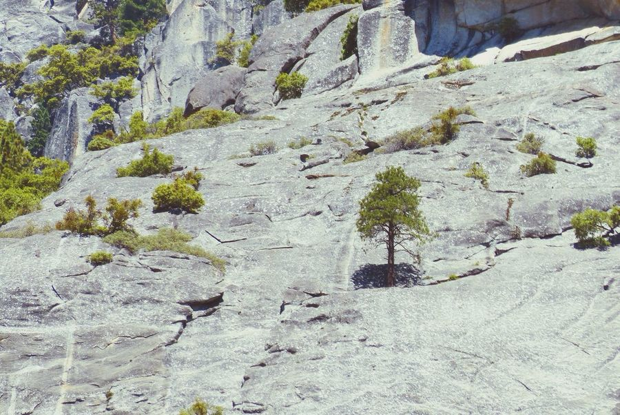 EyeEm Nature Lover Yosemite National Park Tree on the rocks
