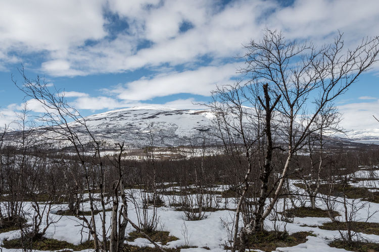 Nuolja Abisko Abisko Bare Tree Beauty In Nature Cloud - Sky Cold Temperature Day Landscape Mountain Nature No People Outdoors Scenics Sky Snow Sweden Tranquil Scene Tranquility Tree Weather Winter