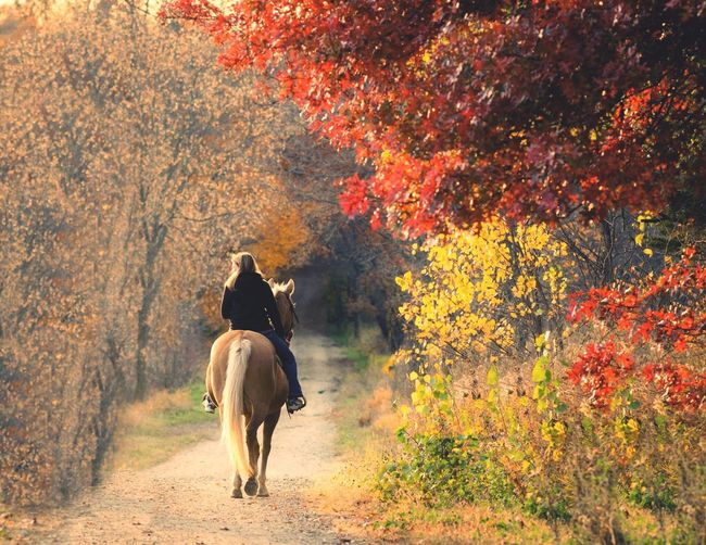 Horse ride in fall Relaxing Enjoying Life EyeEm Gallery Fall Colors Fall_collection Fall Leaves Horse Horseriding I Love Horses Country Life First Eyeem Photo Showcase: January