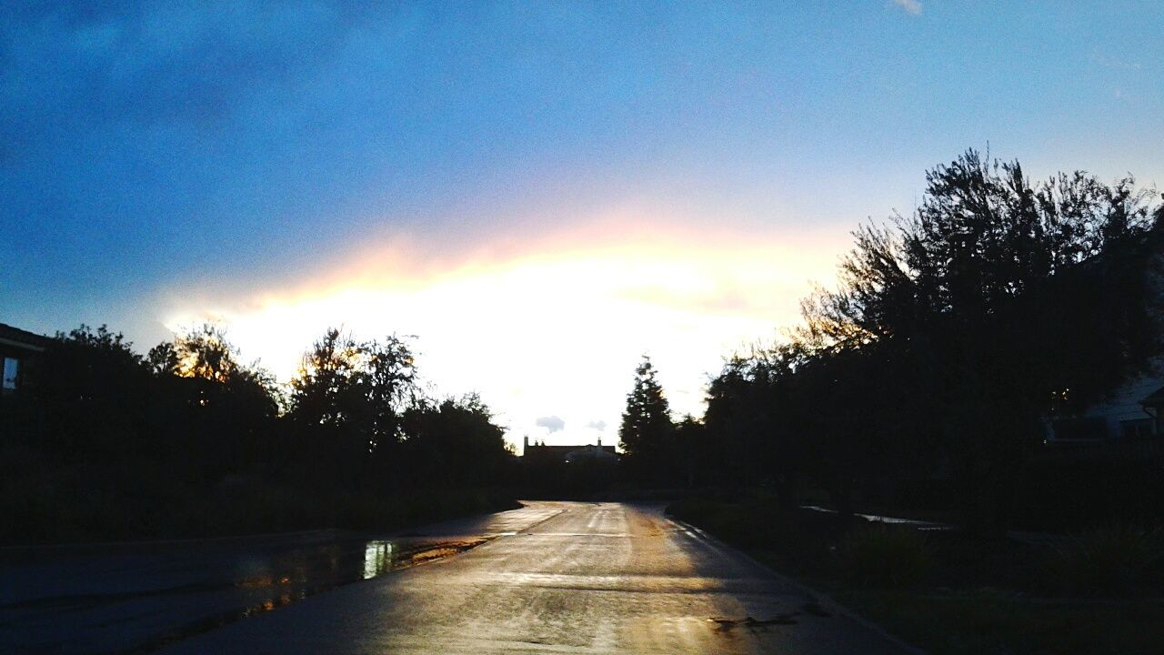 tree, the way forward, sunset, road, no people, sky, outdoors, nature, sunlight, clear sky, scenics, day, beauty in nature