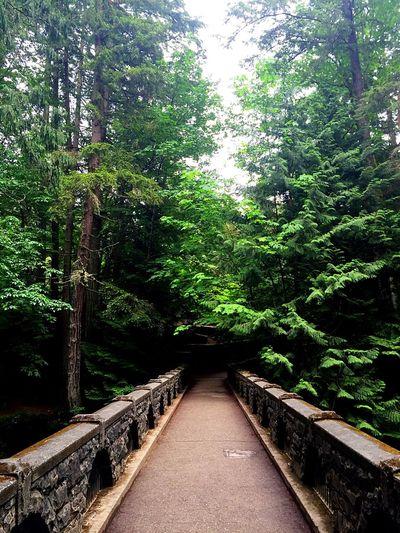 Whatcom Falls: Bellingham Washington Nature Green Outdoors Photography Peaceful First Eyeem Photo