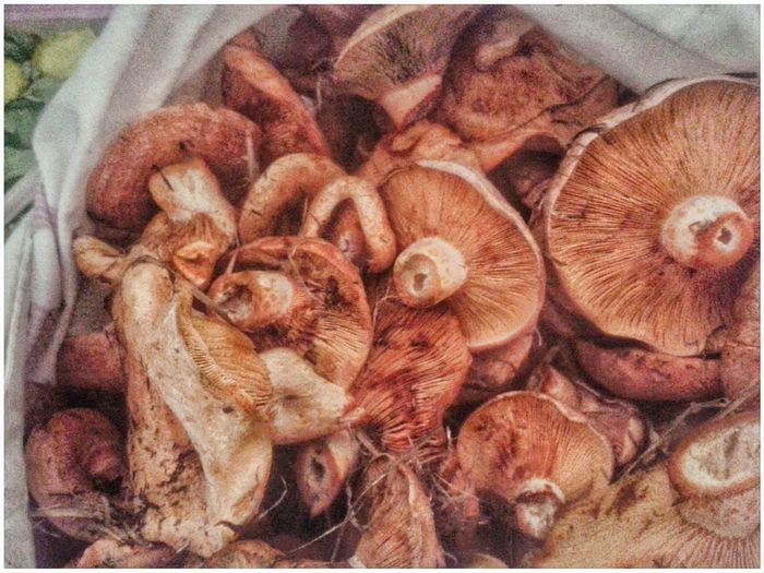 Di nuovo i funghi di pino. Appena raccolti :) Funghi Funghi Di Pino Mushrooms Lactarius Deliciosus Lactariusdeliciosus Picking Smartphone Photography Mobilephotography S3 Mini Autumn Lamellae Orange Color